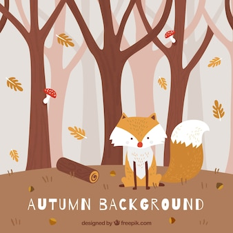 Fondo de otoño con lindo zorro en el bosque