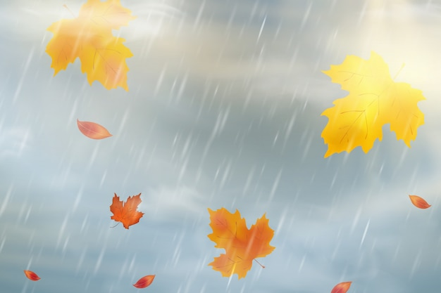 Fondo de otoño de naturaleza con caída de hojas de arce rojo, amarillo, naranja, marrón en el cielo. temporada de otoño clima lluvioso. lluvias naturales precipitaciones climáticas.