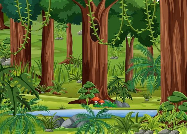 Fondo de paisaje de bosque tropical