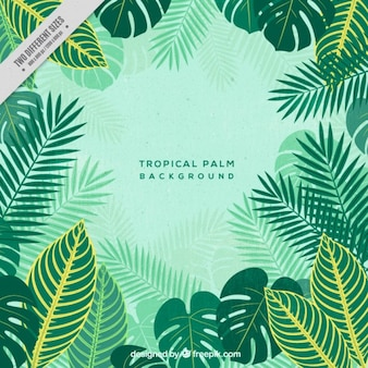 Fondo de palmeras tropicales