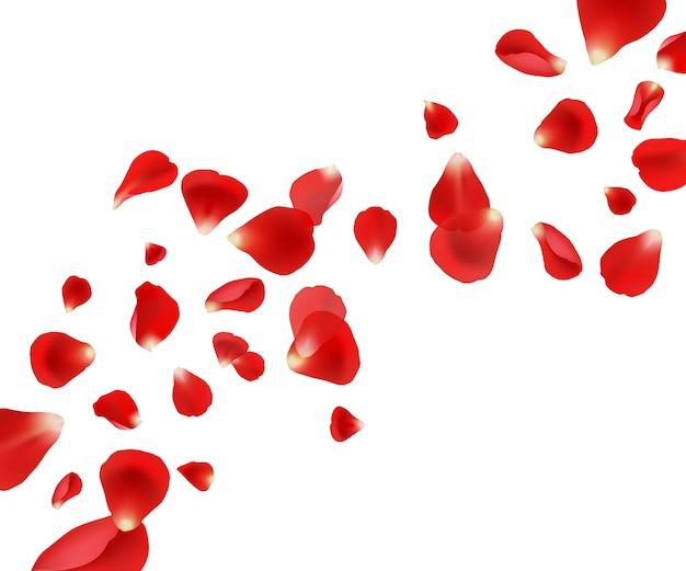 Fondo de pétalos. pétalos de rosa voladores boda hermoso diseño de plantilla para imágenes vectoriales de invitación de tarjetas. ilustración volando pétalo rojo, boda mosca rosa