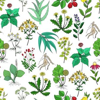 Fondo de plantas medicinales y hierbas medicinales en blanco. patrón con hierbas verdes para la medicina. hierba y flor para ilustración de drogas.