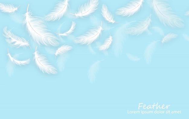 Fondo de plumas