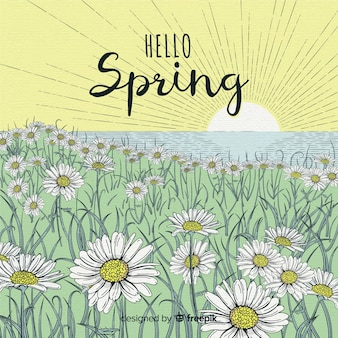 Fondo primavera campo margaritas dibujado a mano