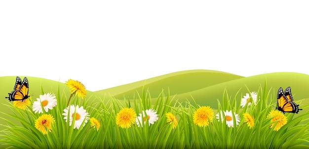 Fondo de primavera con césped, flores y mariposas. vector.