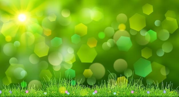Fondo de primavera en colores verdes con cielo, sol, césped y flores.