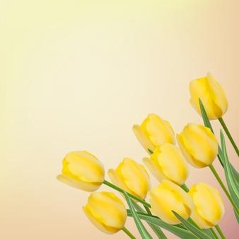 Fondo de primavera con hermosos tulipanes.