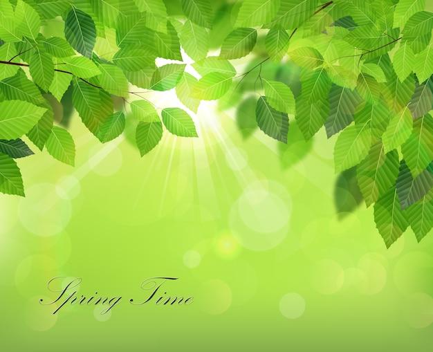Fondo de primavera con hojas verdes frescas