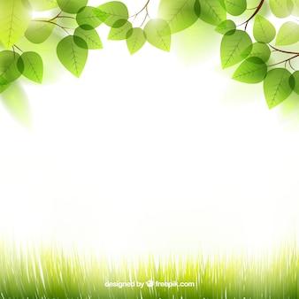 Fondo de primavera con hojas Vector Premium