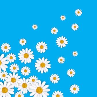 Fondo de primavera con manzanilla floreciente