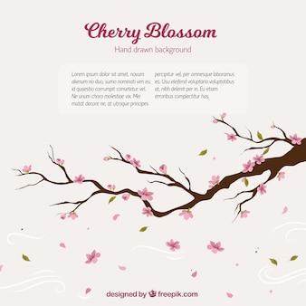 Fondo de rama de árbol de cerezo