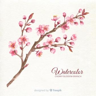 Fondo de ramas y flor de cerezo en acuarela