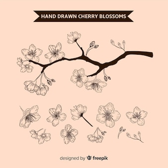 Fondo de ramas y flor de cerezo dibujado a mano