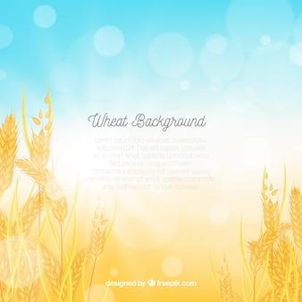 Fondo realista de trigo