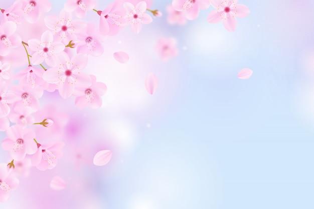 Fondo de sakura