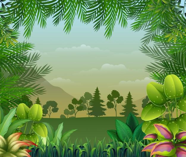 Fondo de selva tropical con árboles y hojas.