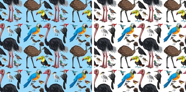 Fondo transparente con aves silvestres