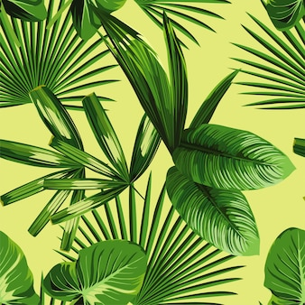 Fondo transparente de hojas de palma tropical