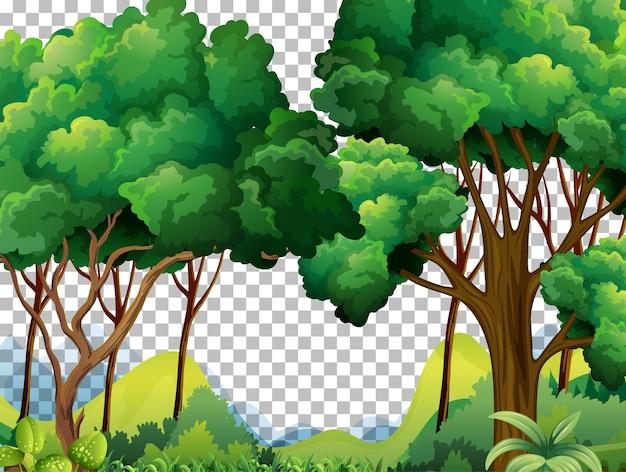 Fondo transparente del paisaje al aire libre de la naturaleza