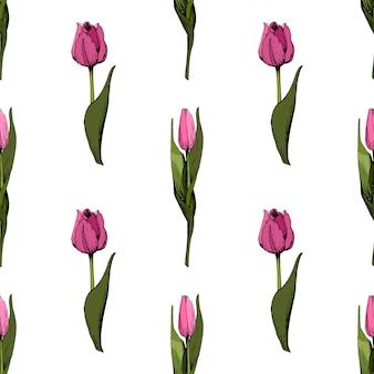 Fondo transparente con tulipanes de color rosa