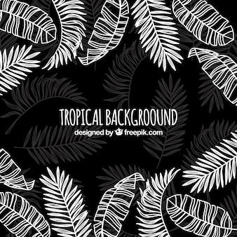 Fondo tropical con hojas diferentes