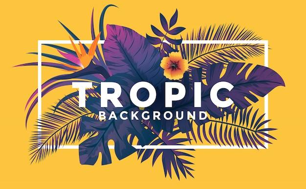 Fondo tropical con marco