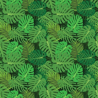 Fondo tropical con monstera.