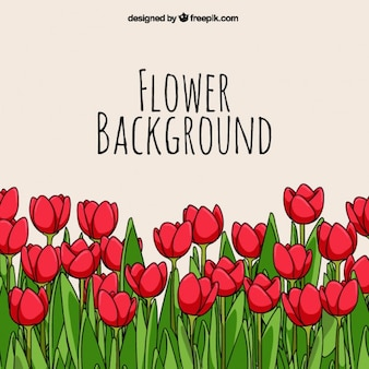 Fondo de tulipanes dibujados a mano