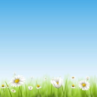 Fondo de vector floral de verano con manzanilla