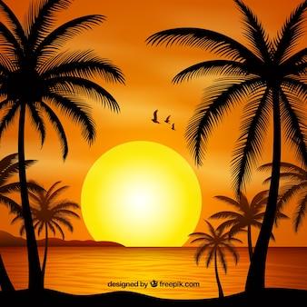 Fondo de verano con atardecer y silueta de palmeras