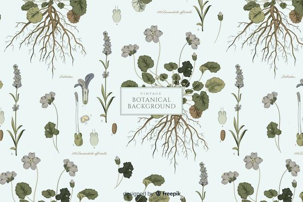 Fondo vintage botánico