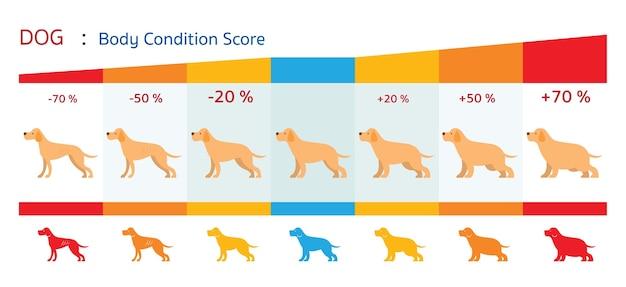 Forma de puntuación de condición corporal del perro, gráfico de salud e infografía