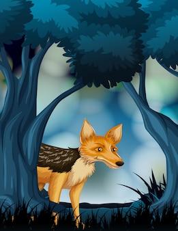 Fox en la escena de la naturaleza oscura