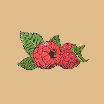 Frambuesa en estilo vintage. ilustración vectorial de color