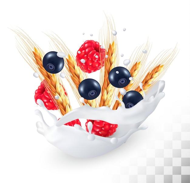 Frambuesas y arándanos y espiga de trigo en un chorrito de leche sobre un fondo transparente