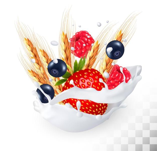 Fresa y arándano y frambuesa y trigo en un chorrito de leche sobre un fondo transparente