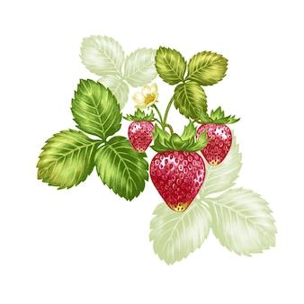 Fresas de ilustración vectorial