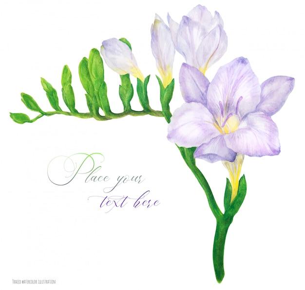Fresca delicada rama de fresia violeta