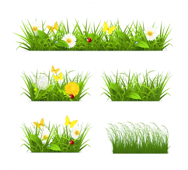 Fress conjunto de hierba,