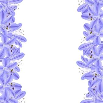 Frontera de agapanthus azul púrpura