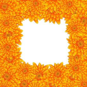 Frontera amarilla del crisantemo aislada en el fondo blanco.