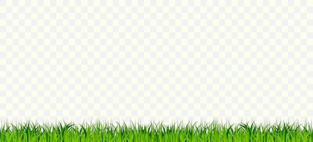Frontera de hierba sin costuras, plantas de mechones verdes fila horizontal, bush sobre fondo transparente. elementos de diseño natural, orgánico, biológico, ecológico