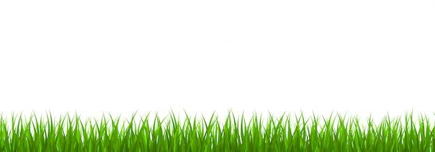 Frontera de hierba verde fresca