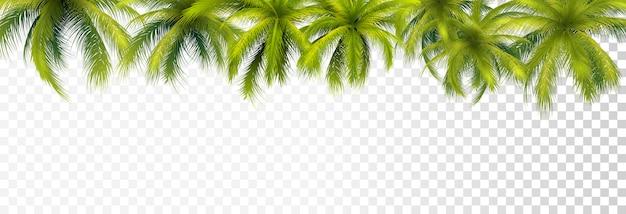 Frontera de hojas de palma