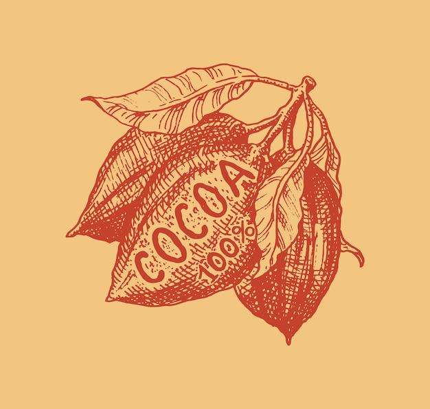 Fruta del cacao. frijoles o granos. insignia o logotipo vintage para camisetas, tipografía, tienda o letreros. boceto grabado dibujado a mano.