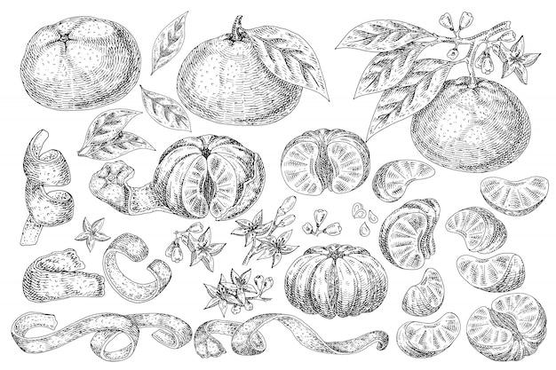 Fruta cítrica mandarina alimentos dibujados a mano.