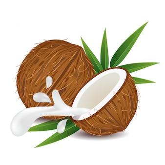 Fruta de coco marrón