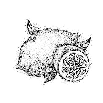 Fruta de limón dotwork. ilustración de vector de alimentos cítricos. boceto dibujado a mano del tatuaje.