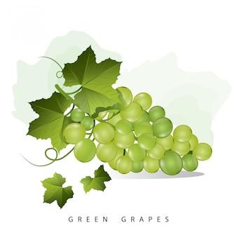 Fruta de uvas verdes
