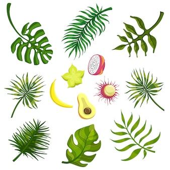 Frutas y hojas tropicales
